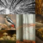 Grafika przedstawia zlepek fotografii lasu